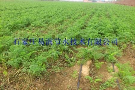zui新滴灌技术-新产品软带供应灞桥区