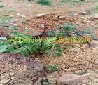 小管出流|四川油桃果树滴灌工程产品