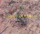 多种陕西西安苹果果园节水灌溉 16mm小管出流PE管价格