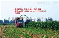 大庆 自走式玉米秸秆收获机