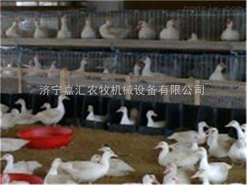 嘉汇鸭用产蛋箱,价格实惠的鸭用产蛋箱