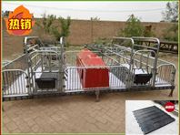 母猪双体产床仔猪哺乳分娩高栏养殖设备厂家冯平出售