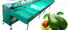 XGJ-Z鳄梨选果机 凯祥鳄梨重量分选分级设备 牛油果选果机