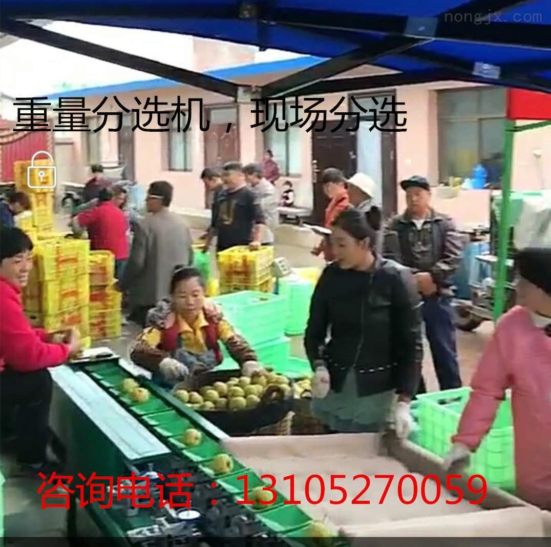 北京分選隻果我有妙招 隻果選果機很重要